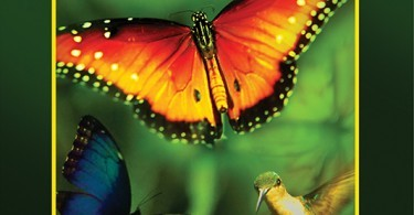 Disneynature Wings_Of_Life Blu-ray DVD