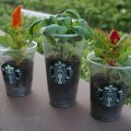 Upcycled Frappuccino Cup Mini Planters