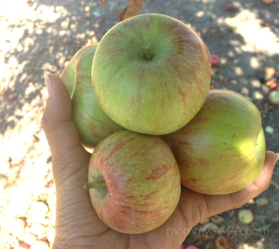 Go Apple Picking In San Diego: Top 5 U-Pick Apple Farms