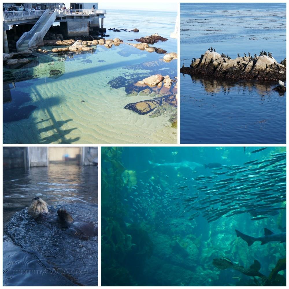 Monterey Bay Aquarium Photos, Fish, sea otters, ocean view, California