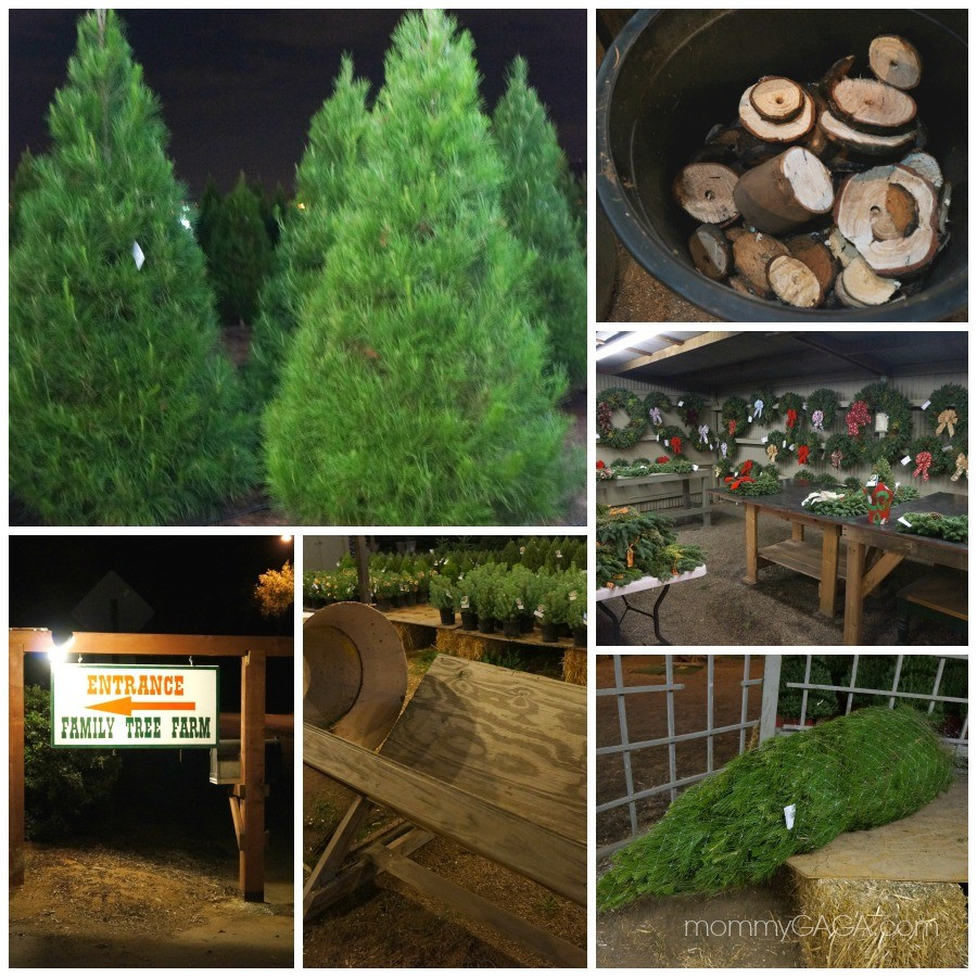 Cut your own tree at Family Christmas Tree Farm, San Diego, CA