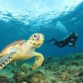 Sea turtle and snorkeling in Puerto Rico