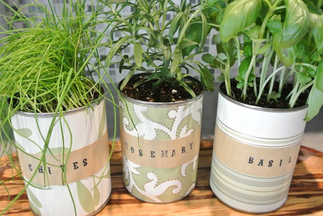 Indoor Herb Garden with Upcycled Tin Cans, Love Shack Chic