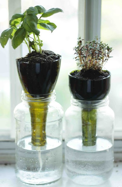 Self watering glass bottle planters little projectiles