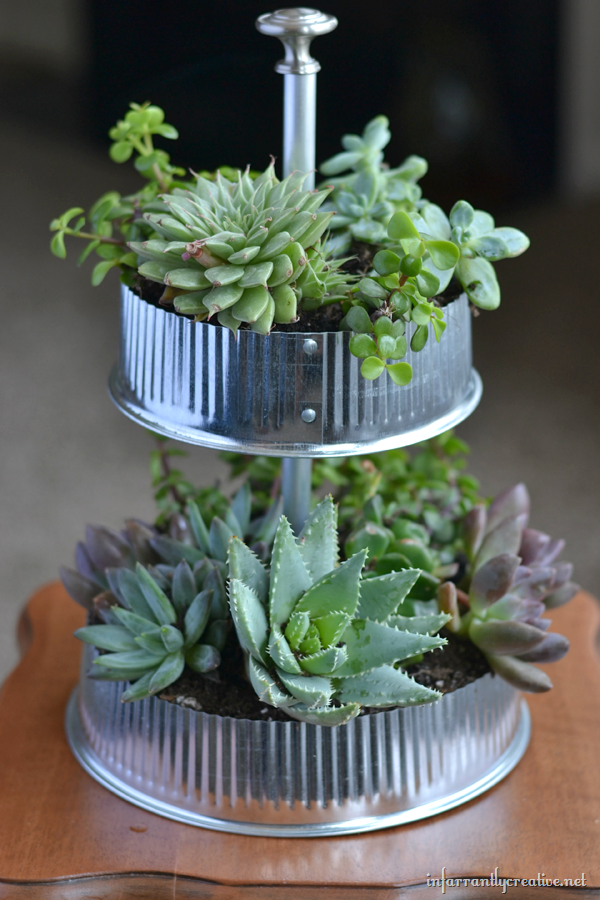 Table Top Succulent Indoor Garden, Infarrantly Creative