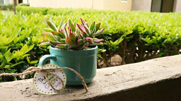 DIY succulent in a mug, an easy DIY teachers gift idea!