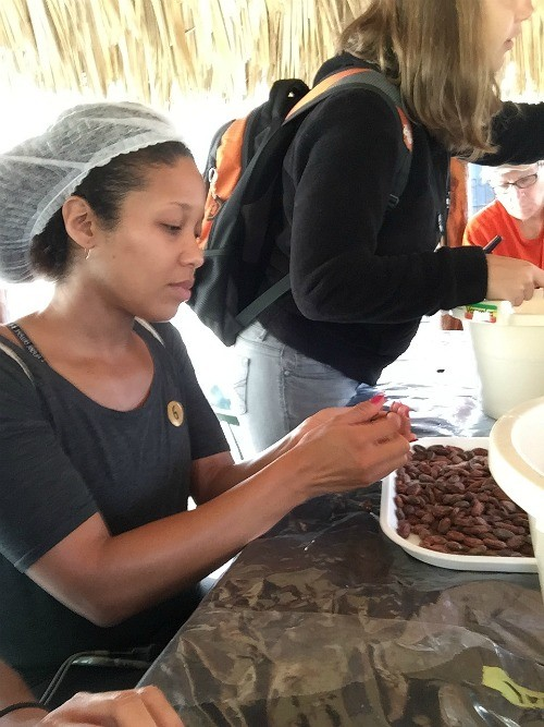 Fathom travel, separating cocoa beans at Chocal, Alta Mira, Dominican Republic