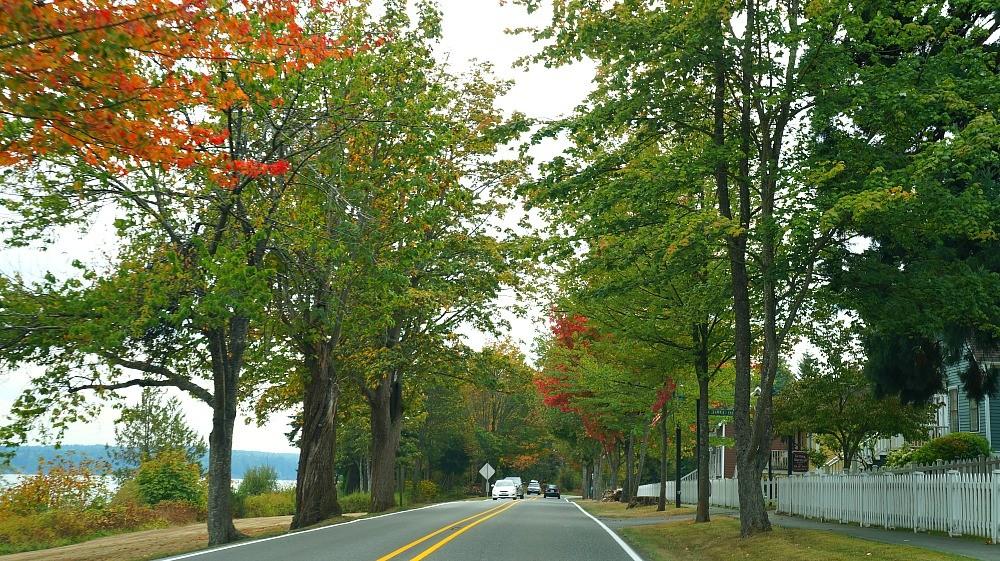 Beautiful fall foliage on my day trip to Bainbridge Island, Washington
