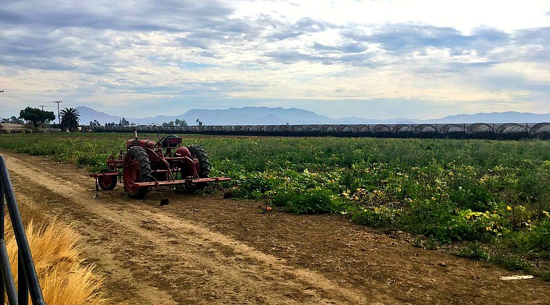 family-friendly-activities-in-camarillo-ca-mcgrath-family-farm-1