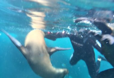 Snorkeling in La Paz, Mexico, swimming with sea lions!