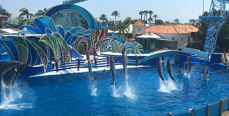 Dolphin Days show at Sea World San Diego