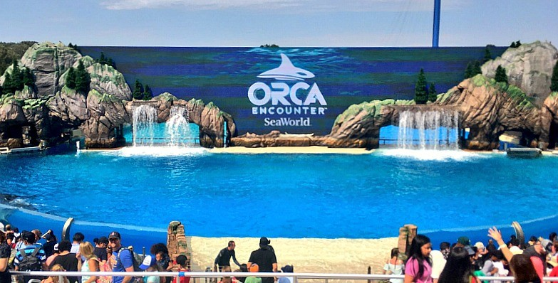 New attractions at Sea World San Diego, Orca Encounter show