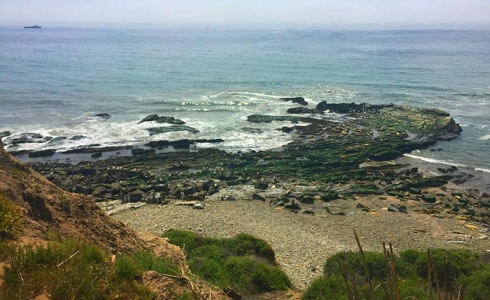 Carpinteria Harbor Seal Preserve