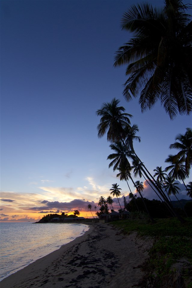 Pictures of beaches in Antigua, a beautiful palm tree beach sunset